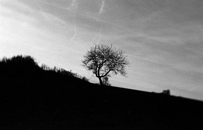 http://juliehauber.fr/files/gimgs/th-33_arbre blada_v2.jpg