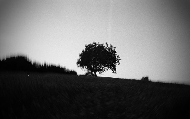 http://juliehauber.fr/files/gimgs/th-4_arbre blada été.jpg